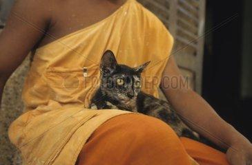 Cat sitting on the legs of a bonze Kampuchea