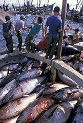 Remontée des Thons à la pêche à la madrague Andalousie