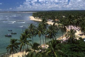 Tourism  Praia do Forte  beach and palm trees  State: Bahia  Brazil.