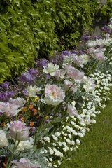 Massif de fleurs au printemps France