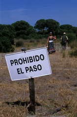 The pilgrimage to El Rocio leads through the National Park Coto Donana which is normally off limits