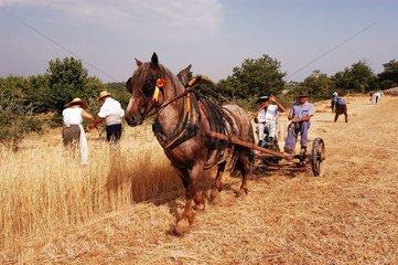 Attelage et récolte traditionnelle de l'Epeautre