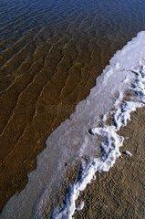 Salt foam on a bank of Salt Lake of Ras Mohamed NP Egypt