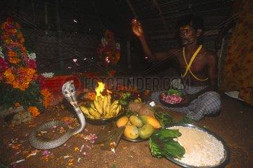 Prêtre Irula et Cobra lors de la Puja