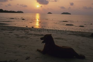 Dog laid down on the sand of a beach to the setting sun