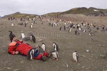 Leisure and gentoo penguins Aitcho South Shetland Island