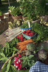 Harvest of fruits and vegetables from garden and herbs