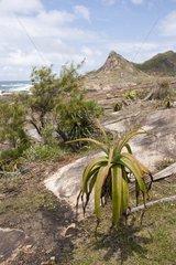 Lokaro Bay near Fort Dauphin in Madagascar