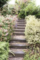 Stairs in a garden  summer