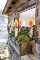 Decoration Candles painted on a birch branch in winter  Lorraine  France