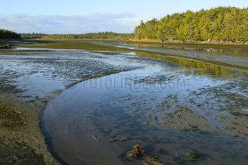 Tidal estuary  Great Bear Rainforest  British Columbia  Canada