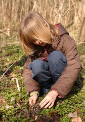 Young girl finding a classic yellow morel in undergrowth