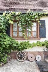 Vines on a house façade  Alsace  France