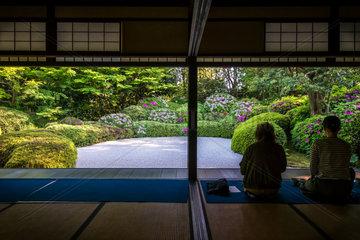 Azalea's full bloom in Jozanji temple  Anjo  Japan