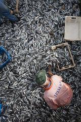 Trawl catch on fishing boat deck. Portugal