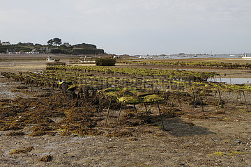 Oyster park in Beg Ar Vilin in Plougrescant  Brittany  France