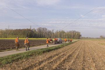 Small Game Hunting  Mackenheim  Bas-Rhin  Greater East Region  France