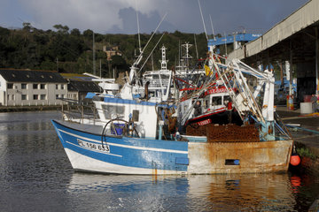 Trawlers equipped for scallop fishing in the port of Le Legue in Saint-Brieuc  Brittany  France
