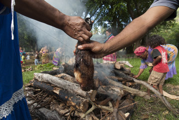 Hands holding a Insular flying fox (Pteropus tonganus) in front of a fire. Feast of the new yam. Tribe of Gohapin. New Caledonia.