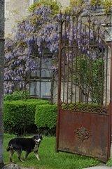 Bouvier de Berne à l'entrée d'un jardin
