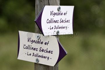 Trail marking Vignoble et Collines Seches  Bollenberg hill  Orschwihr  Haut Rhin  France