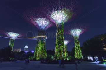 Super trees Garden of the bay park. Singapour