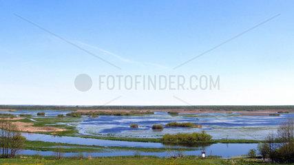 Flooded plain in spring  Biebrza National Park  Poland