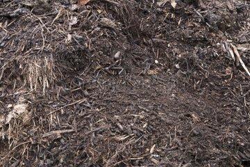 Ripening compost in a kitchen garden