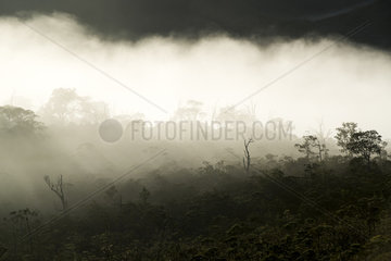 Mining maquis landscape at sunrise. South of Grande Terre. New Caledonia.