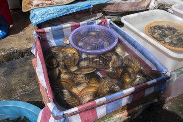 Mussel (Anodonta sp) sold in the market of Dali  Yunnan  China