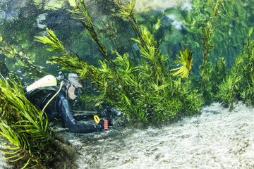 Scuba diver exploring a natural karst spring with clear water  Bonito  Mato Grosso do Sul  Brazil
