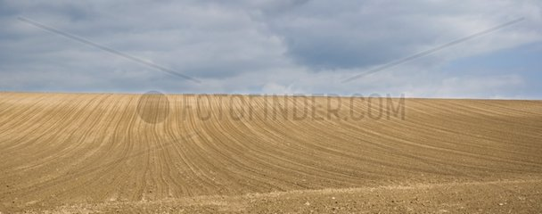 Hill sown Corn in spring - Alsace France