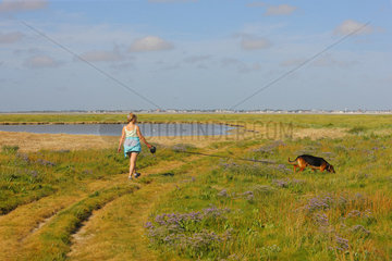 Woman walking with her dog in a salt meadow flowering sea lavender (Limonium vulgare) in the mollieres of Cape Hornu on the schorre in the foreshore of the Somme Bay  in summer  Picardy  France.