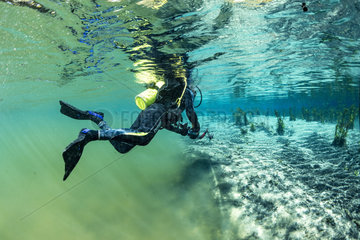 Scuba diver swimming from the main river to a branch powered by a spring with clearer water  Bonito  Mato Grosso do Sul  Brazil