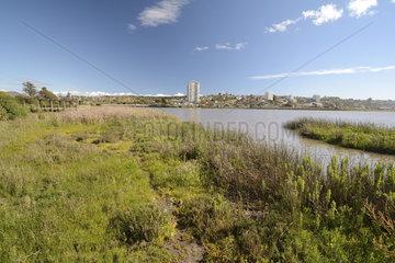 Industrialization and Urbanization of the Aconcagua Estuary  La Isla Reserve  Concon  V Valparaiso Region  Chile