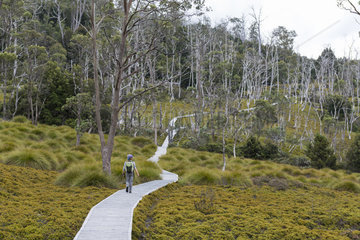 Boardwalk  Cradle Mountain National Park - St Clair Lake  Tasmania  Australia