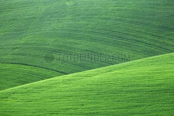 Fields in Casentino region in springtime - Tuscany