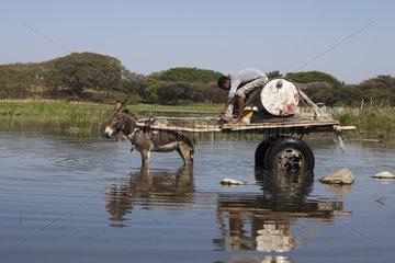 Man on wagon looking for water - Lake Awasa Ethiopia