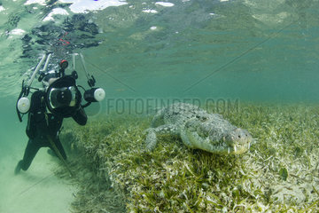 Free diver taking pictures of an American crocodile (Crocodylus acutus)  Chinchorro Banks (Biosphere Reserve)  Quintana Roo  Mexico