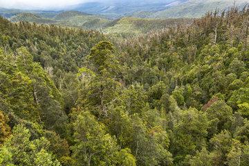 Hartz Mountains National Park  Tasmania  Australia