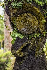 Carved trunk of tree fern  Ile d'Efate. Vanuatu