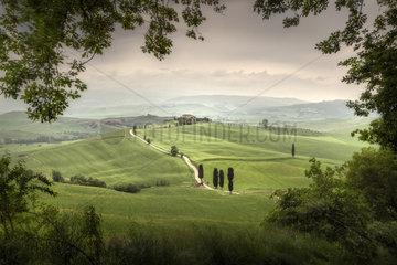 Cypress trees at Terrapille  Pienza  Sienna  Tuscany  Italy