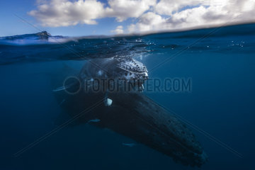 Humpback whale (Megaptera novaeangliae) and its young swimming peacefully in the waters of the Mayotte lagoon.