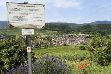 Zinkoepfle hill  vineyard  vineyard trail sign  Grand Cru Zinkoepfle  lavandin  poppy  village view  Soultzmatt  Haut Rhin  France