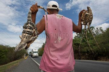 iguanas sold in nicaragua
