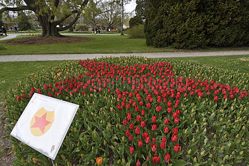 Tulip Festival every year in spring  Independence Park  Morges  canton of Vaud  Switzerland