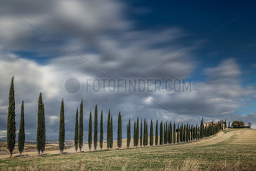 Cypres trees in Val d'Orcia  San Quirico d'Orcia  Bagno Vignoni  Siena  Tuscany  Italy
