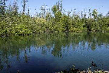 Parc de l Isle  Reserve naturelle nationale des Marais de l Isle  Saint Quentin  Aisnes  France