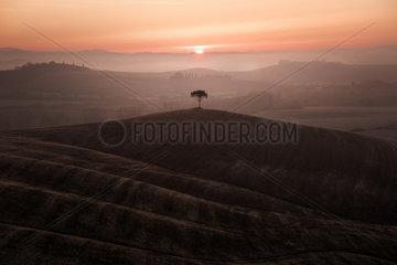 Hills of Tuscany  Siena  Tuscany  Italy