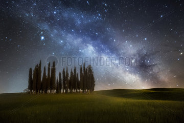 Cypress trees in Val d'Orcia  San Quirico d'Orcia  Siena  Tuscany  Italy
